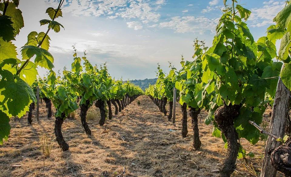 Découvrir le Beaujolais, la route des vins
